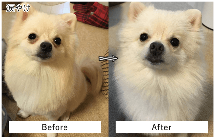 涙焼け改善 Before&After
