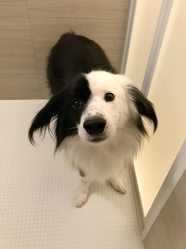 幸せになった保護犬