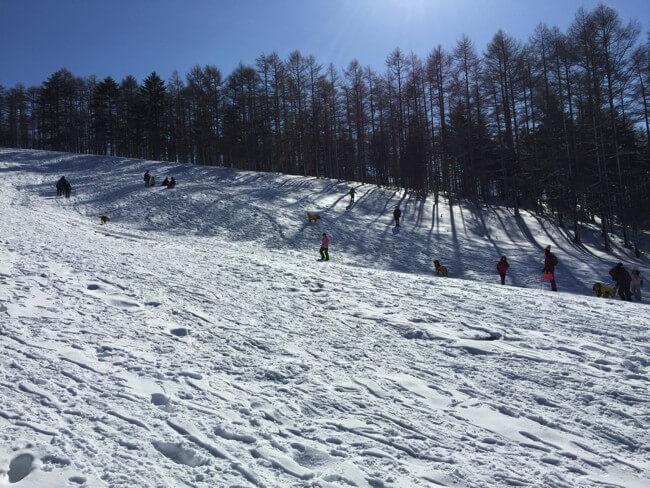犬連れスキーの楽しみ方