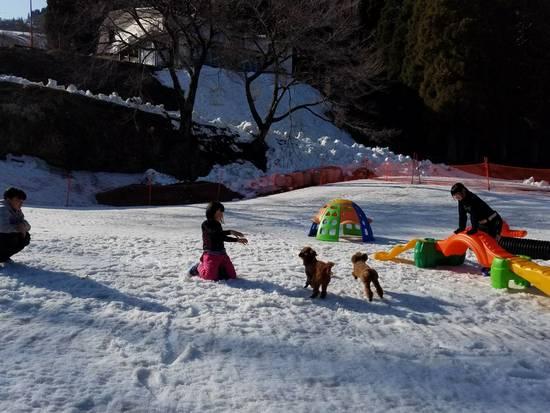 犬連れOKスキー場でみんなどうやって楽しむ